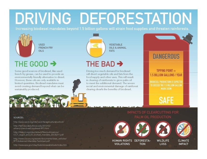 biodiesel deforestation
